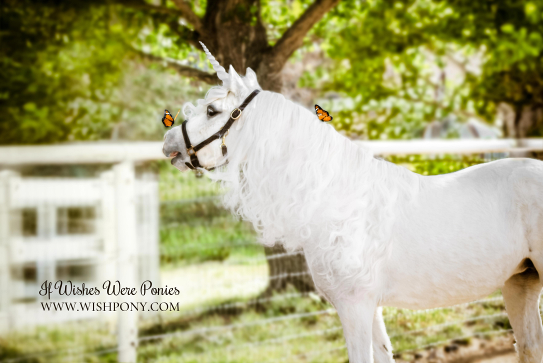 Unicorn Photography Is Real And It S Magical 13newsnow Com